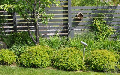 Mitä kasveja kannattaa kohdevalaista?