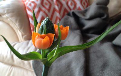 Oranssitähdikki – Aurinko olohuoneessa