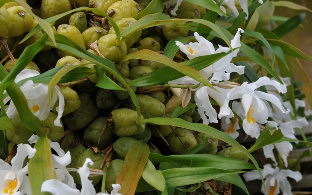 Lumikuningatar kukkii Talvipuutarhassa