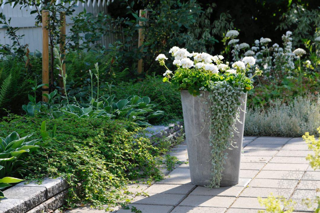 Valkoinen puutarha