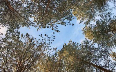 Puutarhan terveysvaikutukset, joista voit nauttia heti